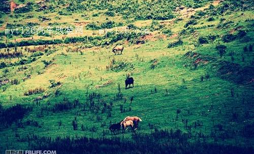 栗园草场位于贵州省务川县泥高乡,面积约有十万亩山地,栗园草场是西南