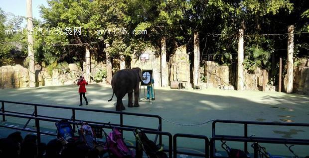 长隆野生动物园自驾游