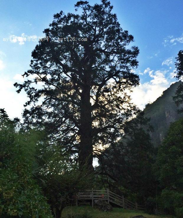 首页 自驾生活 >> 内容    神农顶风景区,是神农架林区内的精华景区